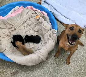 Mom dog with her puppies
