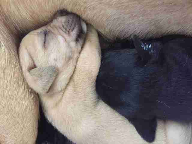Puppy cuddling with mother