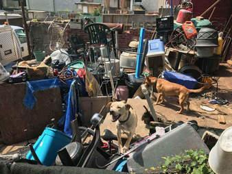 Dogs living in junkyard