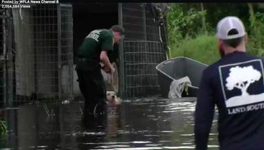 dogs stranded irma hurricane rescued