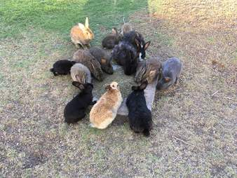 Rabbits eating from bowl