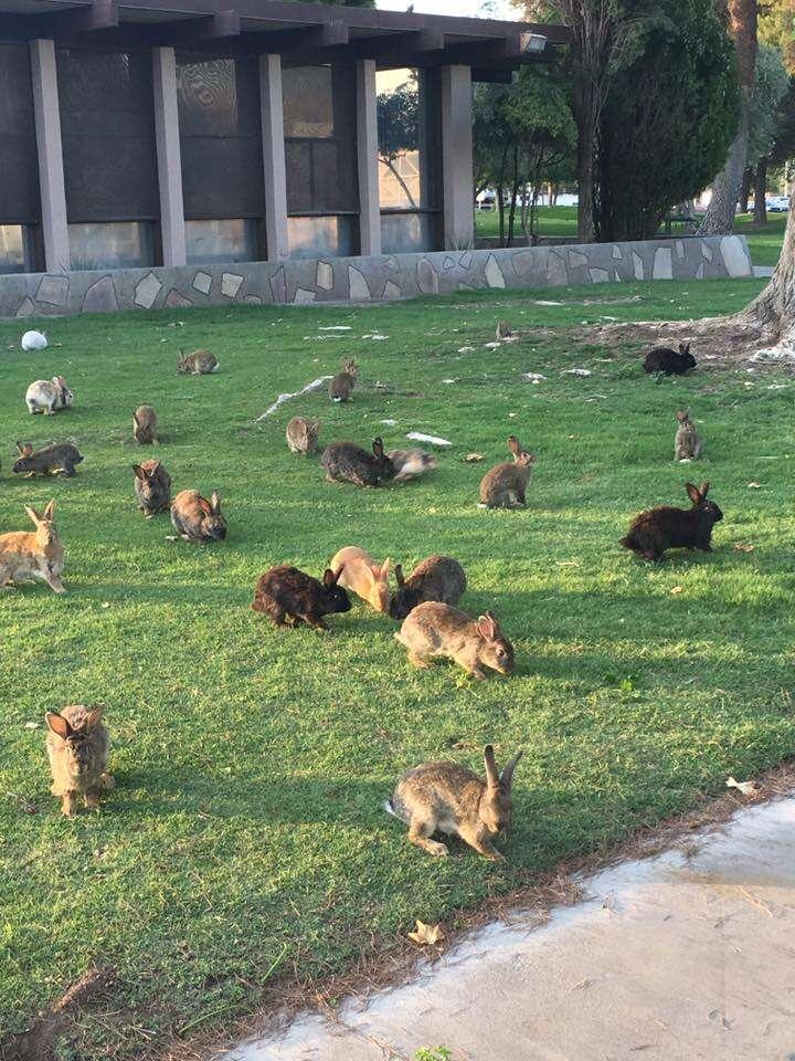 Rabbits at Vegas dumping ground
