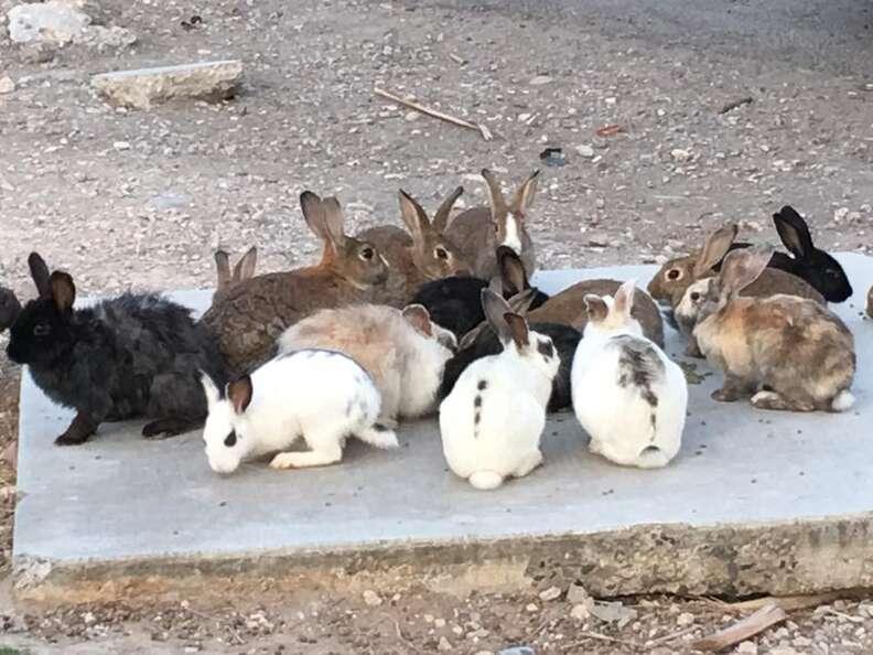 Rabbit at Las Vegas dumping ground