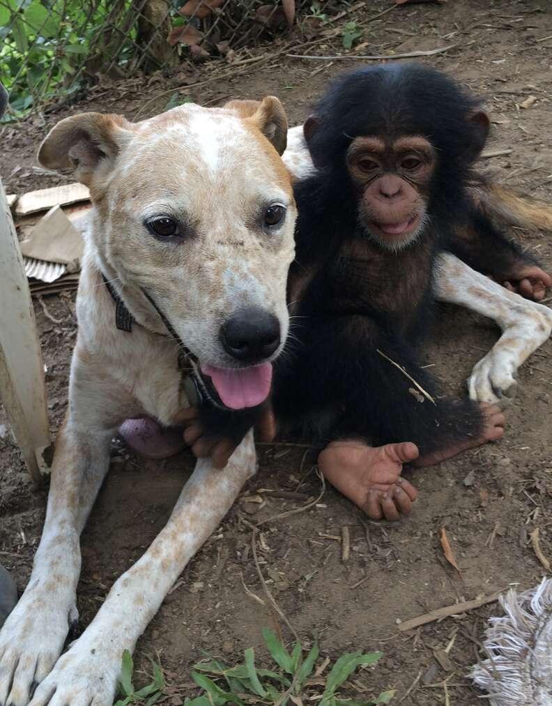 Chimp and dog