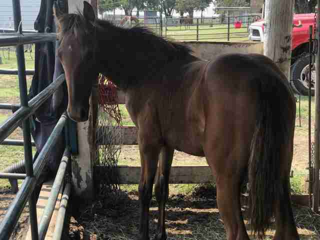 Horse rescued from shack