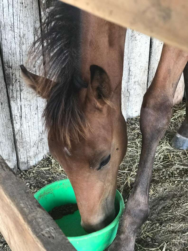 Horse drinking water after being saved from abandonment