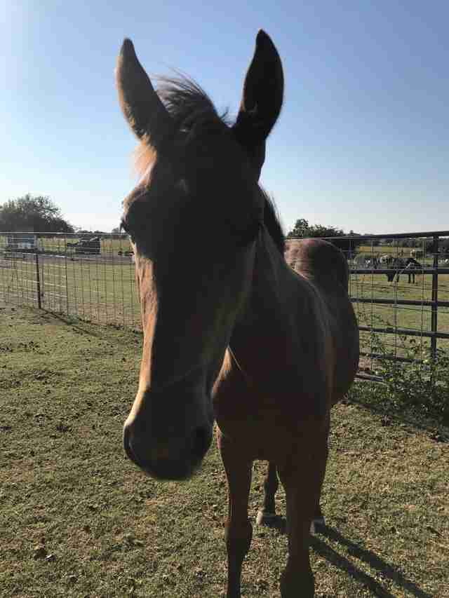 Horse saved from shack