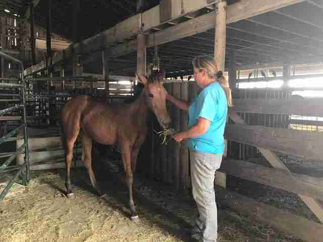 Horse learning to trust rescuer