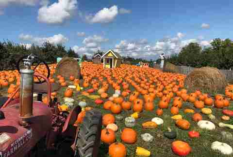 Best Apple Picking Near NYC: Apple Farms & Orchards to Visit This Fall - Thrillist