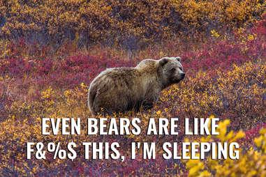 Alaskan grizzly bear in fall
