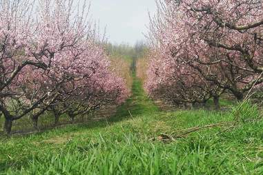 Jenkins-Lueken Orchards