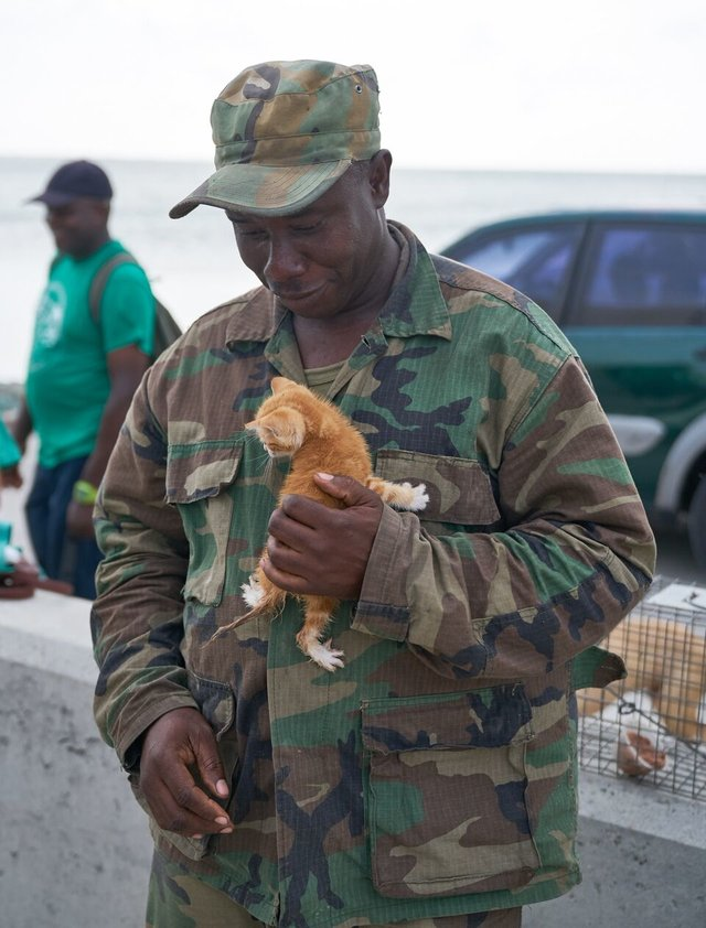Soldier Rescues Kitten