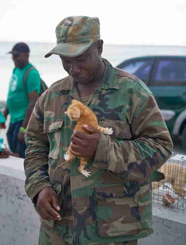 Soldier holding tiny kitten