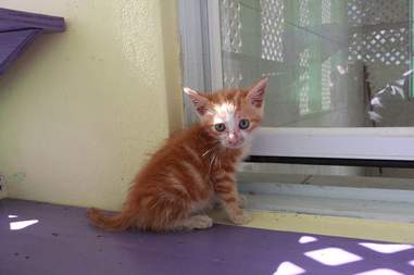 Rescued kitten at shelter