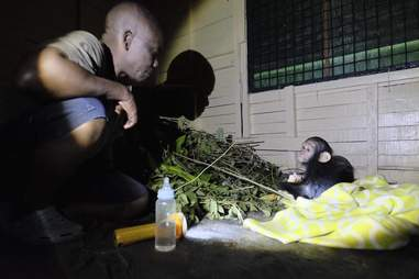 Chimp with caretaker