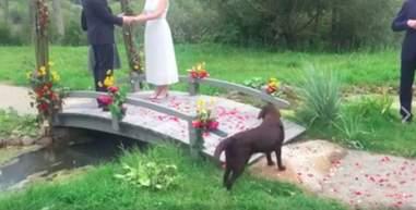 dog crashes wedding