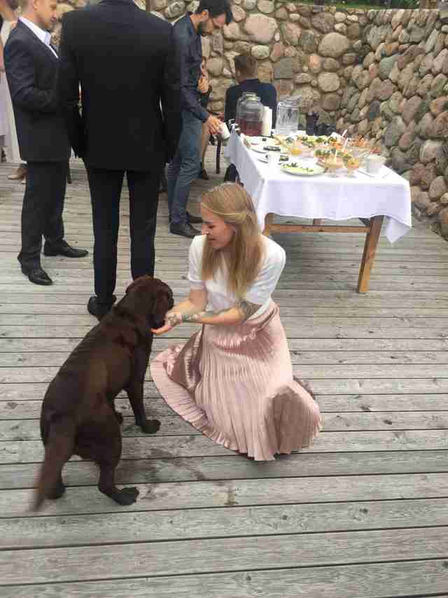 dog crashes wedding