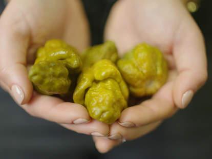 world's hottest pepper