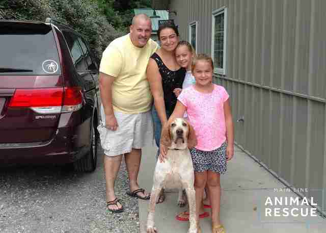Rescued hound with new family