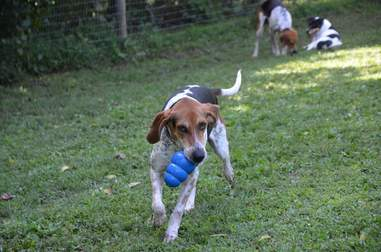 Rescued hounds playing in yard