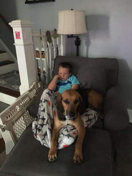 Boy with rescued hound