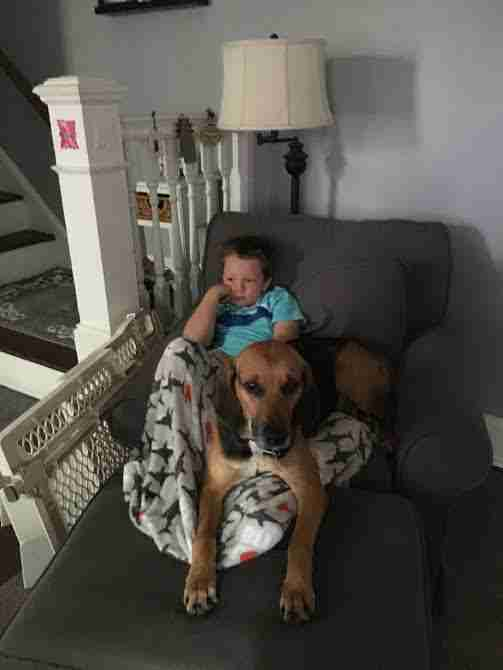 Boy with rescued hound