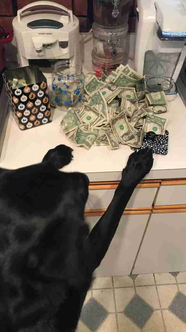 dog loves money