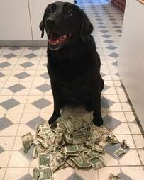 dog loves money