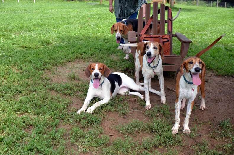 Rescued hounds together outside