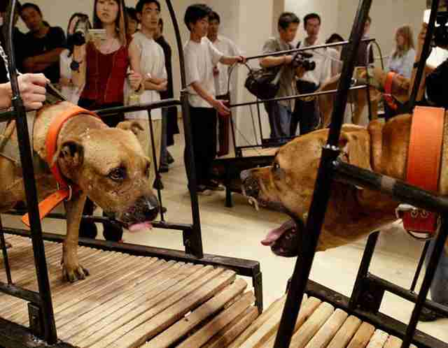 guggenheim dog fighting exhibit