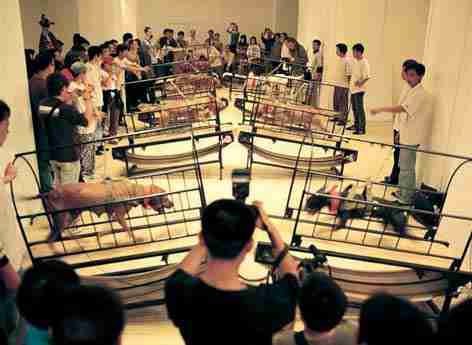 guggenheim exhibit dog fighting