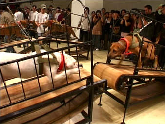 guggenheim dog fighting exhibit