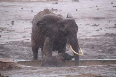 Elephant mom trying to save baby from mud