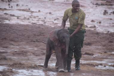 Guy reuniting baby elephant with mom