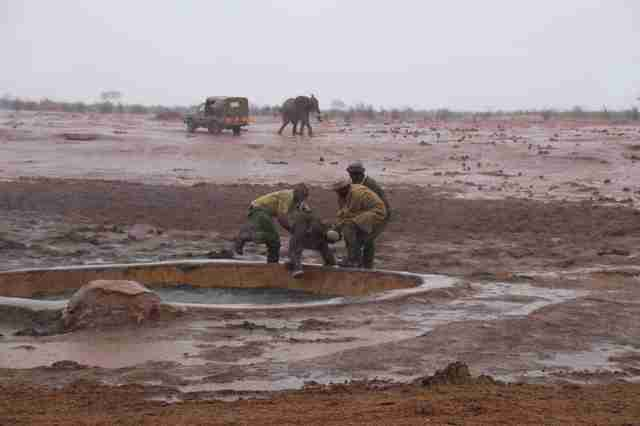 Men saving baby elephant from mud