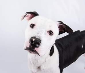 Portrait of shelter dog