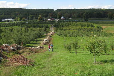 Wilklow Orchards