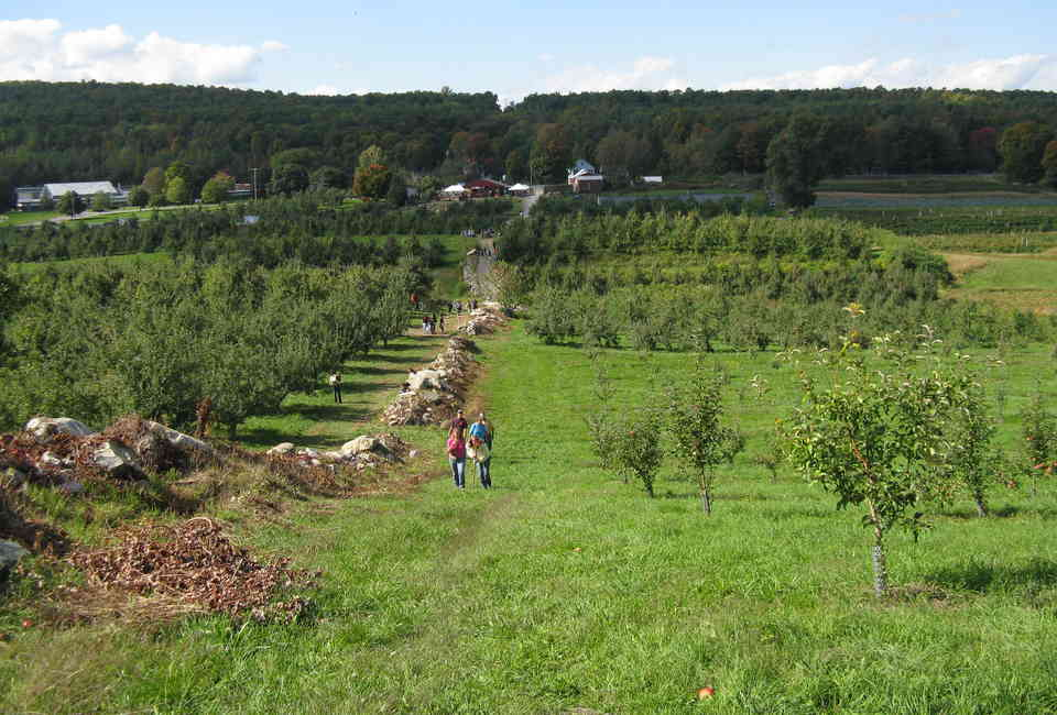 Best Apple Picking Near NYC: Apple Orchards to Visit This Fall
