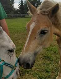 rescue horse comforts everyone he meets