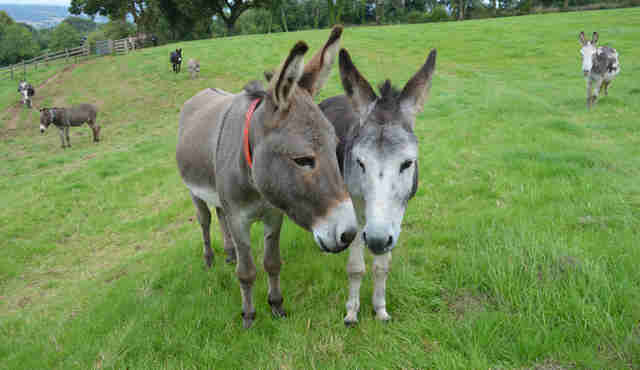 Donkeys at sanctuary