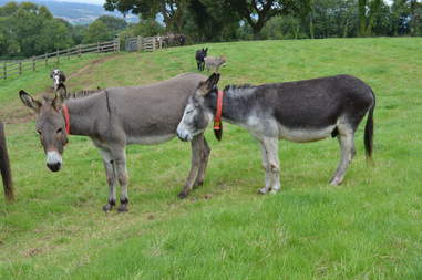 Rescued donkeys at sanctuary