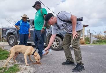 Rescued dog on Barbuda