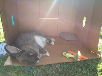 bunny loves boxes and rocks