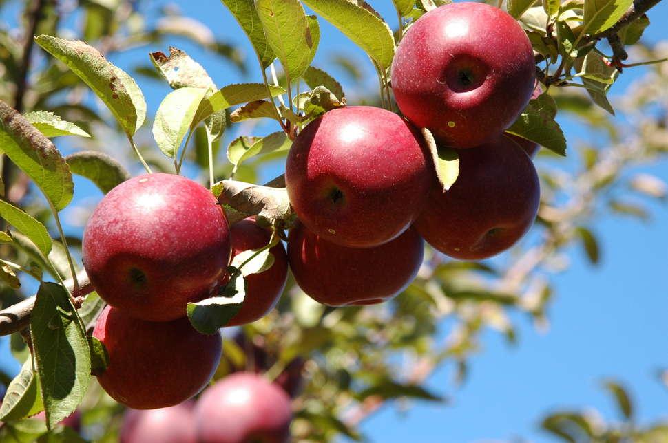 Apple picking winery warwick ny