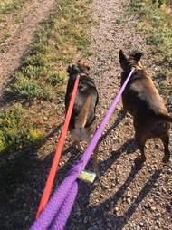 two dogs walking