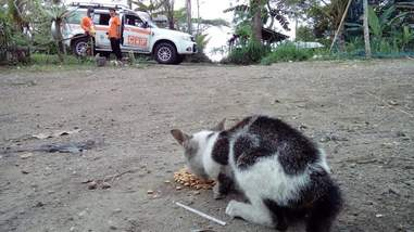 Abandoned cat eating food