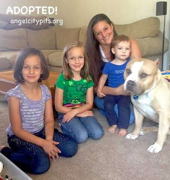 cat loving pit bull gets adopted