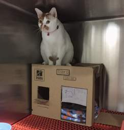 Cat on top of cardboard house