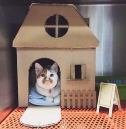Cat in fancy cardboard home