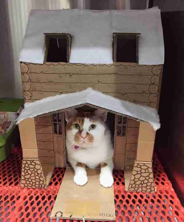 Cat in cardboard gingerbread house